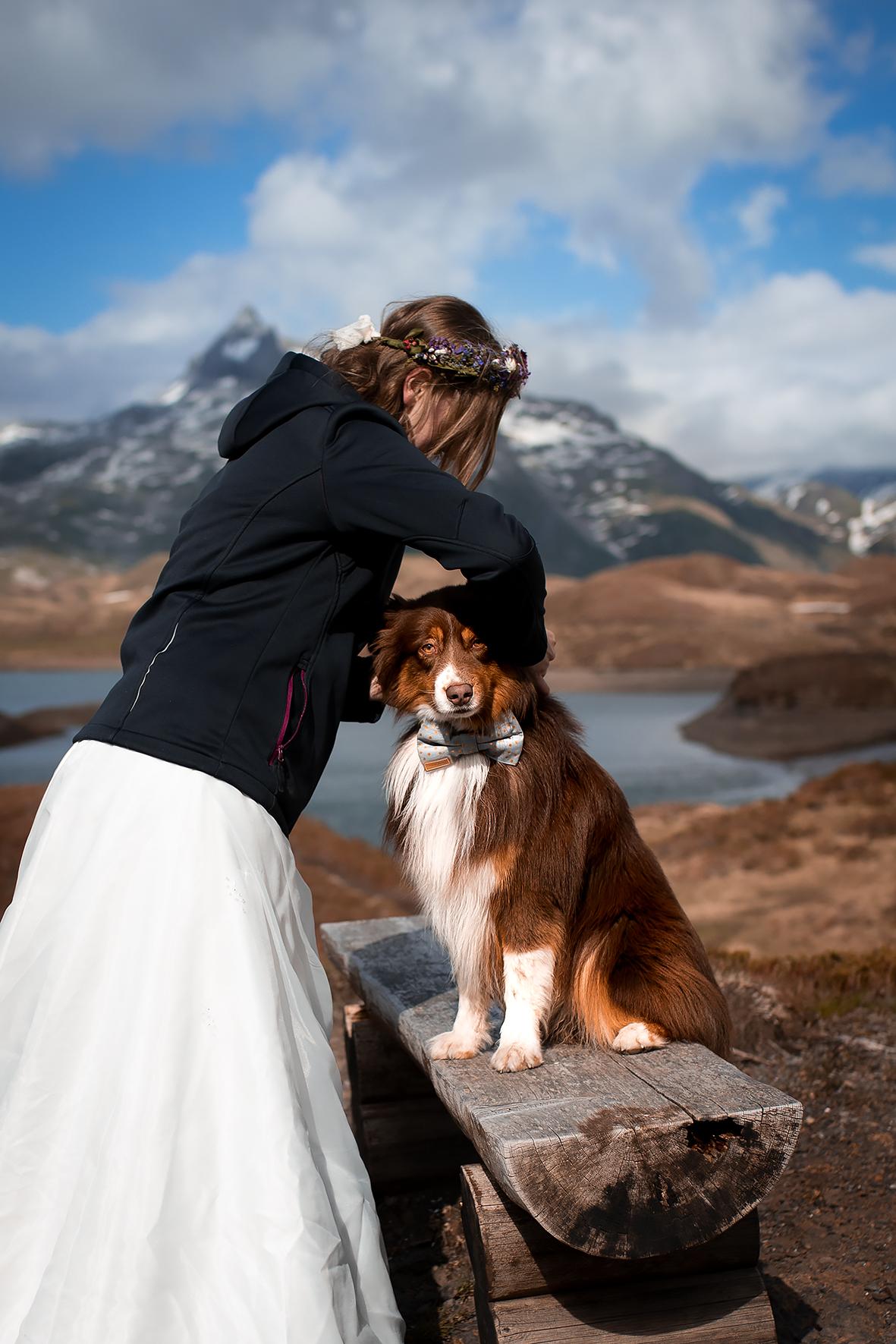 Getting Ready für eine Hochzeit in den Bergen für den Hund des Brautpaares. Der Australian Shepherd bekommt für die Hochzeit eine Fliege für Hunde umgebunden. Die Fliege ist hellblau mit goldenen Punkten und passt perfekt zu seinem Fell. Er sitzt dabei auf einer Holzbank am Wanderweg entlang des Tannensees auf der Melchsee Frutt.